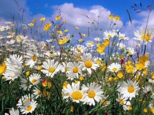 цветы в России