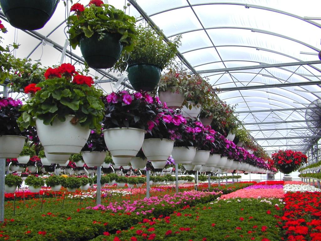 Развитие цветоводства