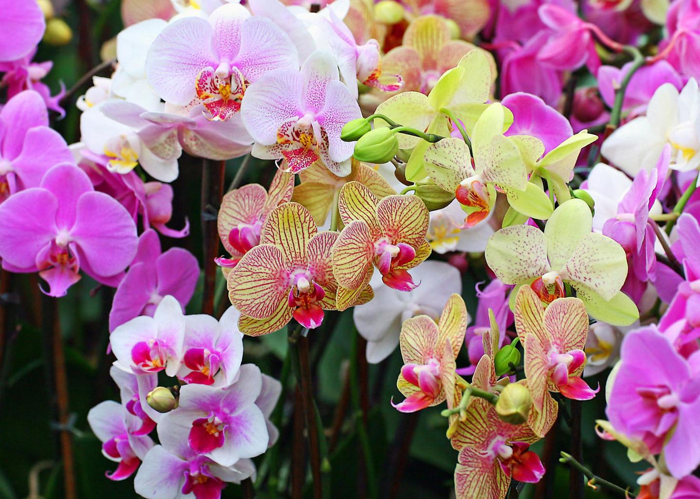 Шикарные цветы картинки орхидеи