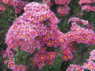 Брянские цветы