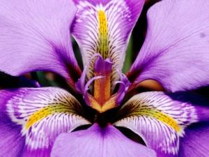 цветы для знаменательного дня