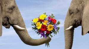заказ цветов в Брянске
