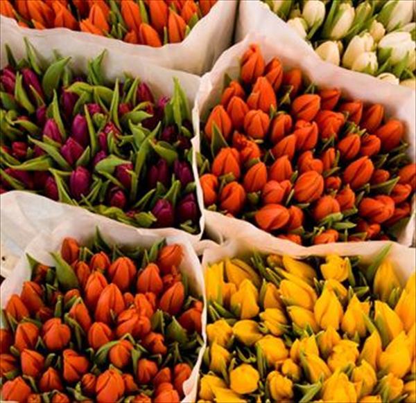 Где купить цветы оптом в Москве?