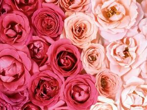Если бы розы могли говорить