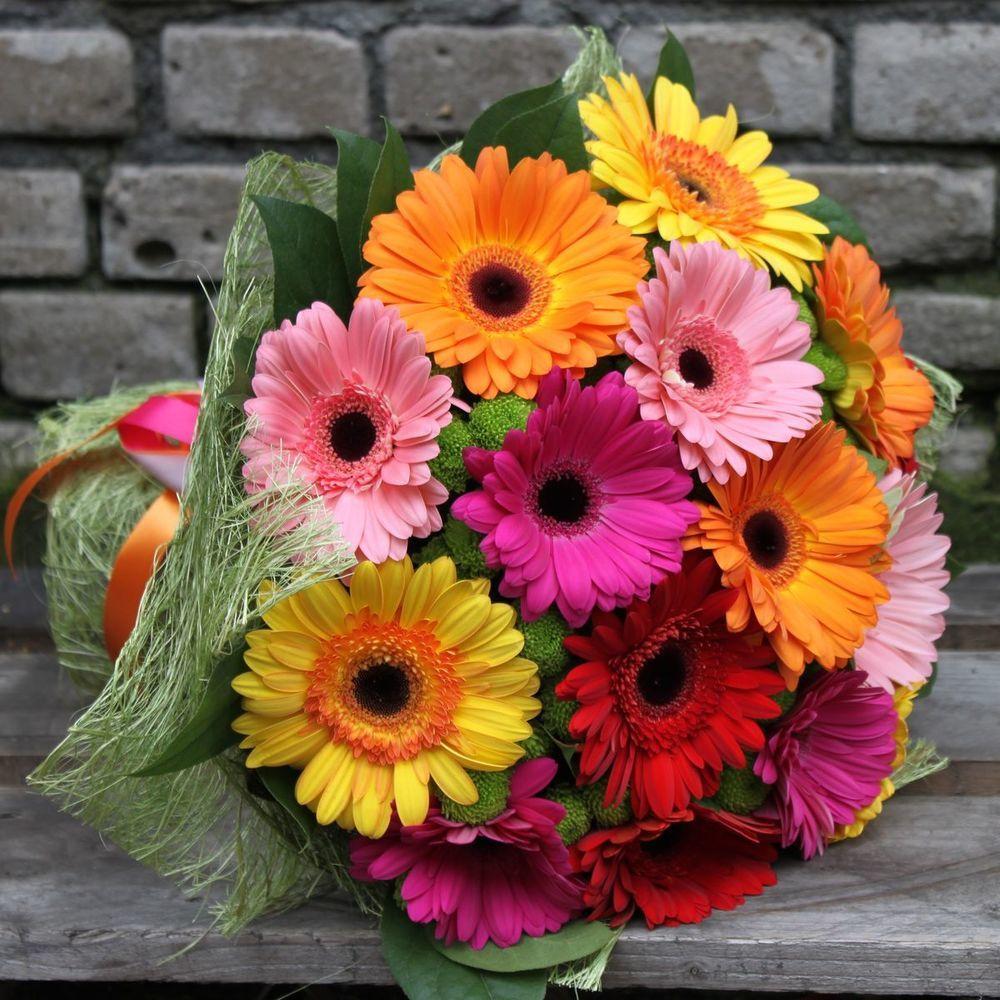 картинки с цветами гербера