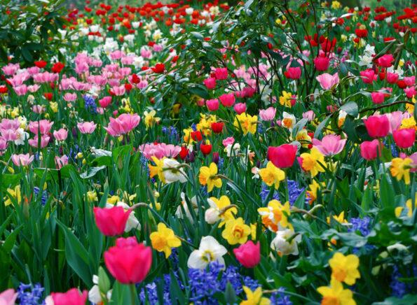 О чем вам расскажут цветы
