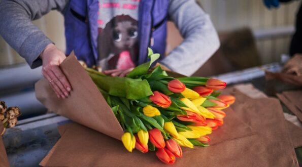 Как выбирать тюльпаны-советы флористов