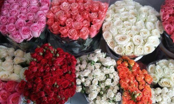 Народные приметы и суеверия о розе