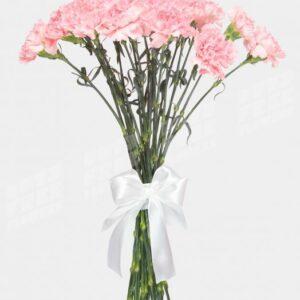 Гвоздика белая с нежно-розовой каймой