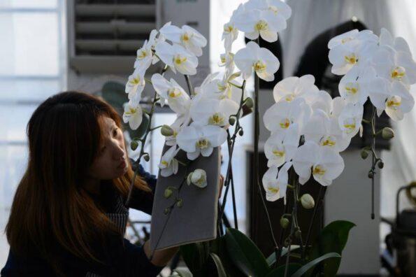Значение и символика орхидеи