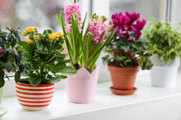 Мифы о цветах и комнатных растениях