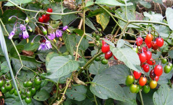 Ядовитые растения и цветы, от которых следует держаться подальше