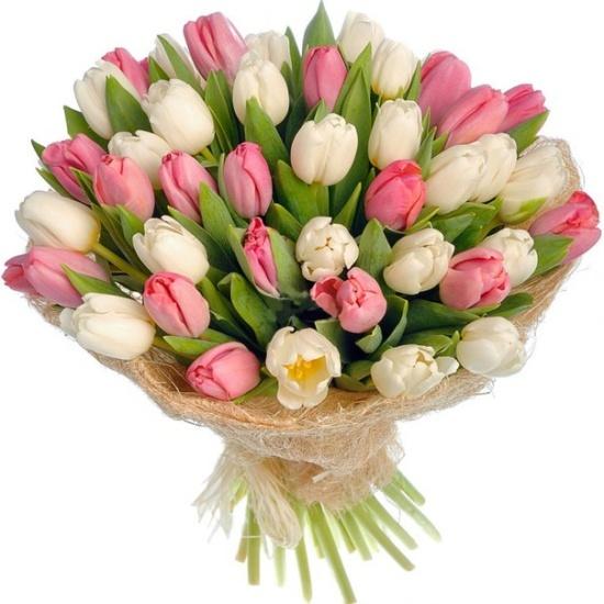 Букет из 35 тюльпанов нежного цвета